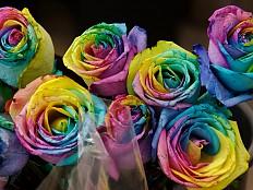 Homo-Ehe in den USA - USA: Homophobe Floristin verliert erneut vor Gericht